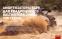 Комплект стойки и пружины подвески в сборе SS20 Tour Комфорт для квадроциклов Baltmotors Jumbo 700 (4шт)(32210/42126-max-00) 1